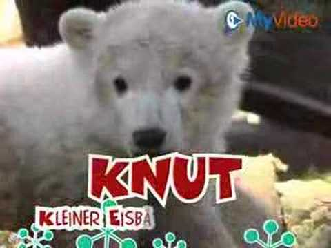 Knut Song