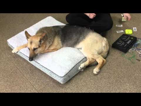 Dog Acupuncture Treatment for Arthritis-Integrative Vet med Center