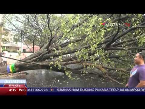 Pohon Tumbang Setelah Diterjang Hujan Deras Mp3