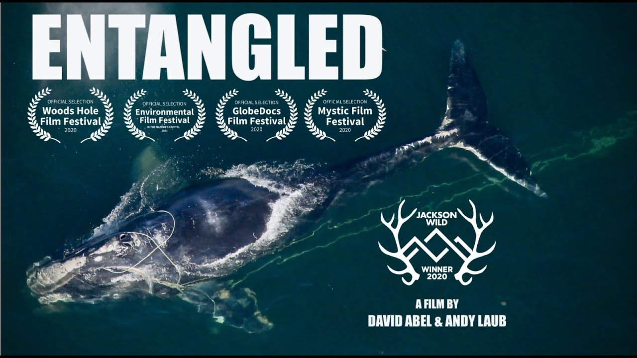 Entangled Q + A with David Abel
