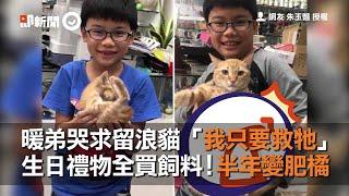暖弟哭求留浪貓「我只要救牠」 生日禮物全買飼料!半年變肥橘