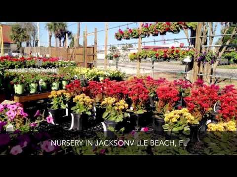 Rockaway Garden Center Nursery Jacksonville Beach FL