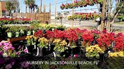 Rockaway Garden Center Nursery Jacksonville Beach FL
