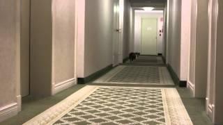 котики бесятся в коридоре