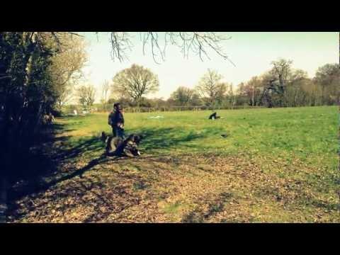 swatt-dogs-caucasian-ovcharka-4