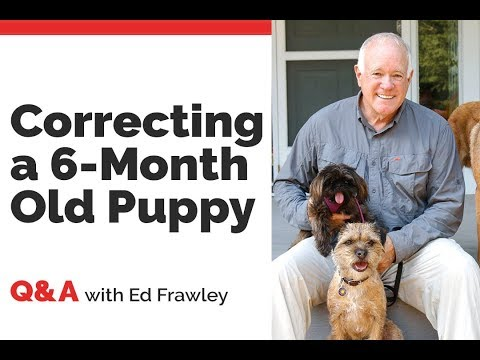 Q&A - Should I Correct My 6 Month Old Puppy?!