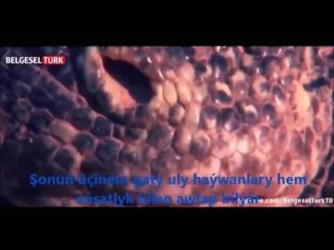 Muny bilmek gyzykly! Dünýäniň iň zäherli haýwanlary1.Täsinlikler dünýäsi / Turkmen prikol daldir!