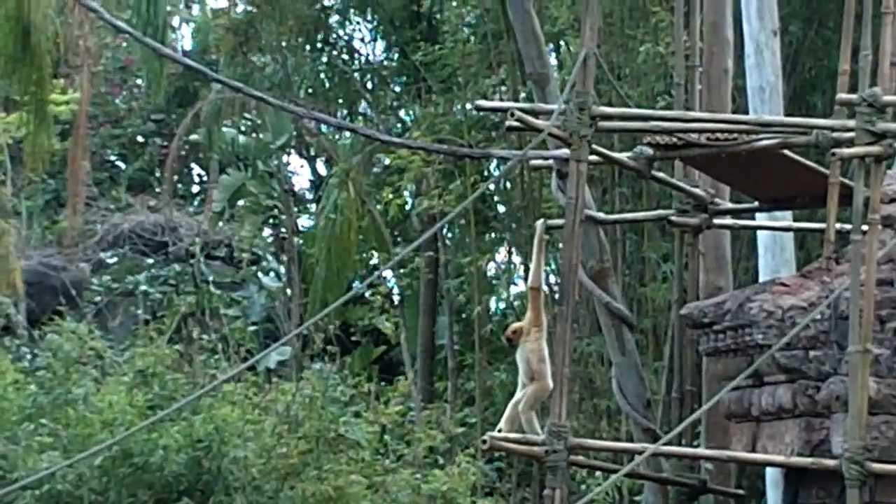 monkey swinging on vines youtube