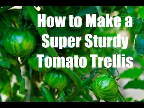 3 Inexpensive Tomato Supports & How to Make a Super Sturdy Tomato Trellis