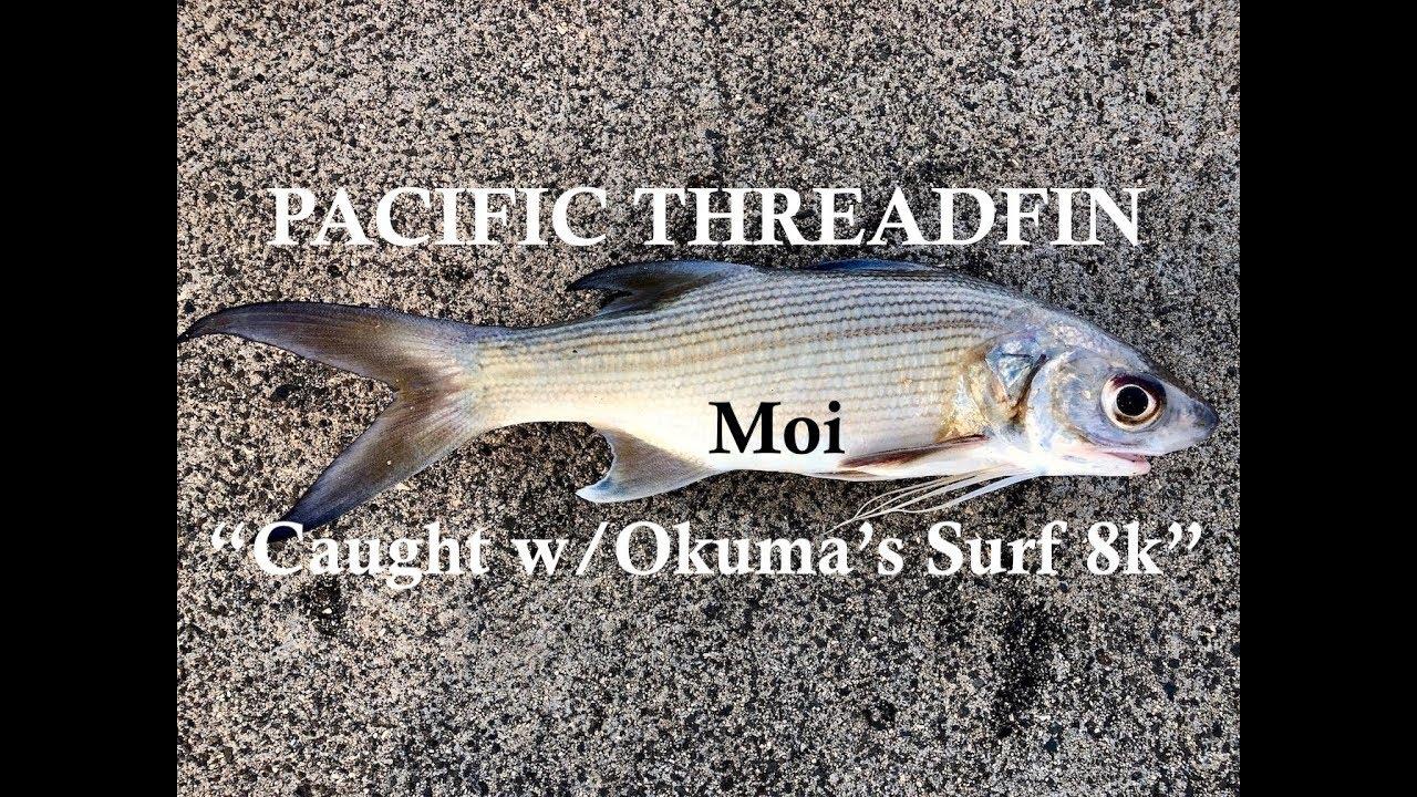 Field Testing Okuma's NEW Surf 8K Reel!