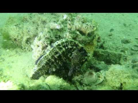 Little Palm Beach - South China Diving Club - Hong Kong Diving