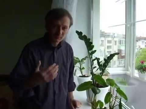 Растение плачет  Петр Сидорчук