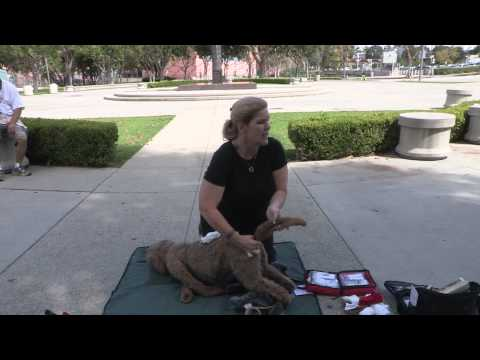 Denise Fleck shares her expertise on Pet First Aid and CPR with Dog Man's class