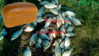 Активный клев карася в августе\ловля карася на ржаной хлеб\Самарская область