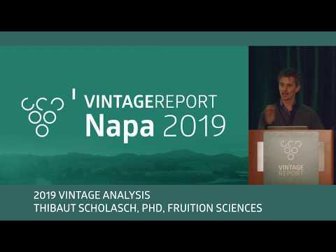 2019 Napa Vintage Report - Thibaut Scholasch - Vintage Analysis 1