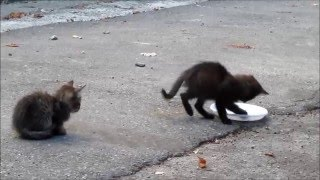 Городские коты