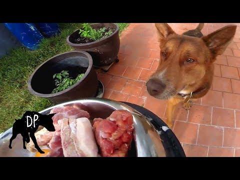 Raw Fed Australian Kelpie Mix | Raw Dog Diet #64