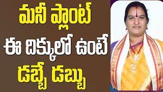 మనీ ప్లాంట్ ఈ దిక్కులో ఉంటే డబ్బే డబ్బు | Money Plant Vastu In Telugu | Money Plant Vastu | Money