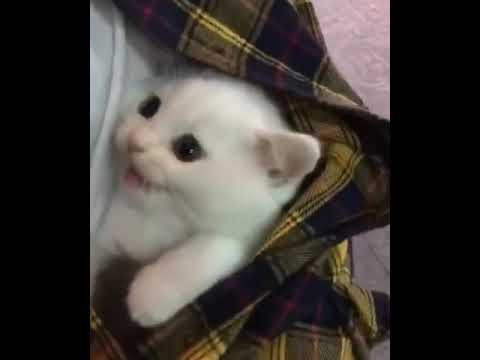A cat hiding in the clothes of his owner. 😍