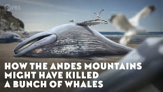 How the Andes Mountains Might Have Killed a Bunch of Whales