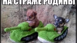VH-смешные фотографии собак-funny dogs foto
