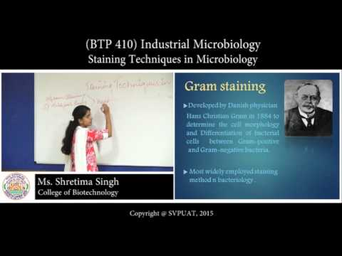 Microbiology techniques staining pdf