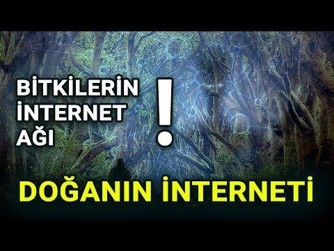 Doğanın İnterneti - Bitkilerin İnternet Ağı