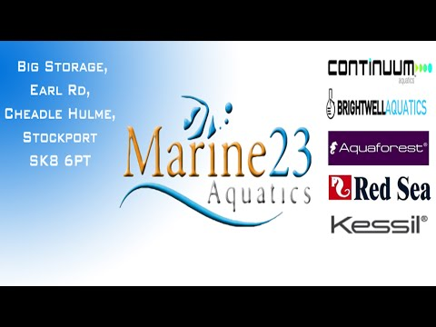 Amazing Fish Shops: Marine 23