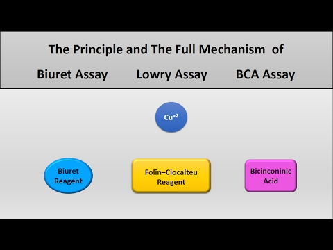 The principle of Lowry assay, Biuret assay, and Bicinconinich (BCA) assay protein assays