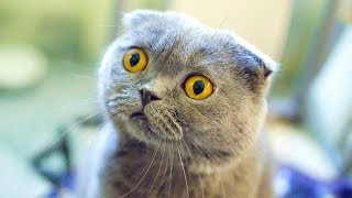 Cute Is Not Enough, Best Funny & Crazy Cats, Try Not To Laugh Cats Videos, Animals TV