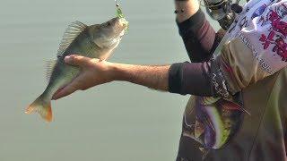 Ловля Окуня на Микроджиг  FishUP & Crazy Fish