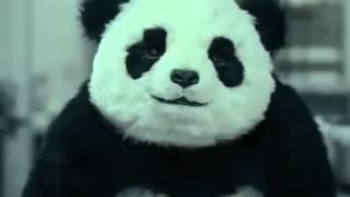 Panda im rage modus