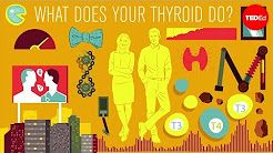 How does the thyroid manage your metabolism? - Emma Bryce