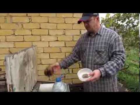 Рецепт эликсира для полива рассады от дьякова