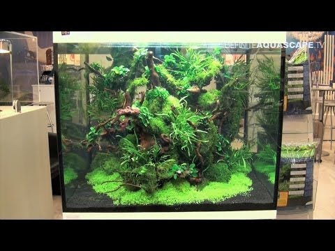 Aquarium ideas from InterZoo 2014 (pt. 18) - AS Aquaristik, Prodibio