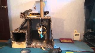 Домик для котят(курильские бобтейлы)