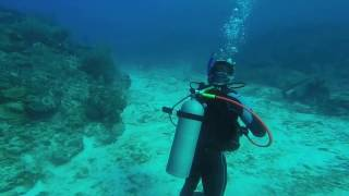 mrllamasc scuba with sharks