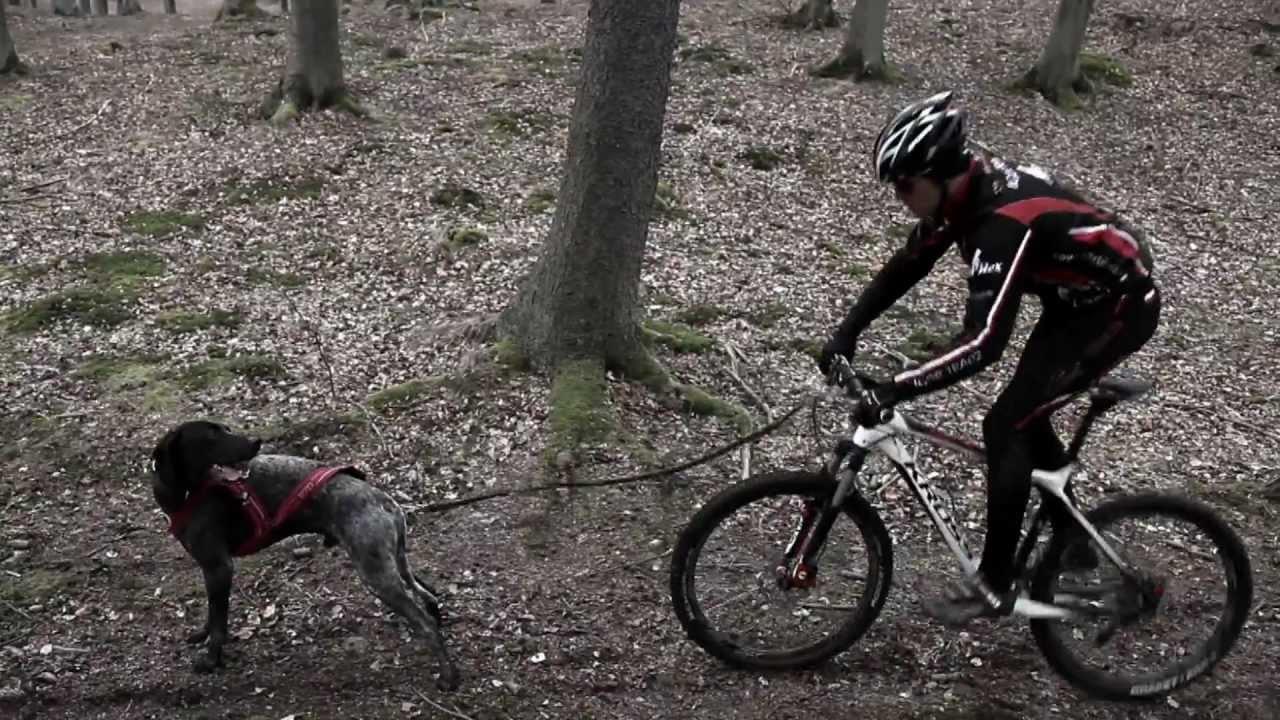 Bikejoring - Topic - YouTube