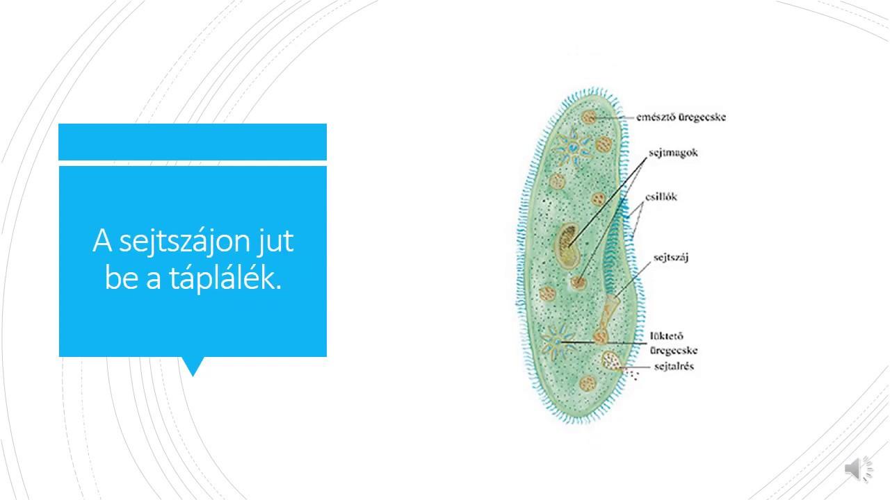 6. osztályú baktériumok. Kapcsoló sablon