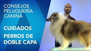 Baño y Mantenimiento para perros de doble capa en la peluquería canina. Por Luis Martín del Rio