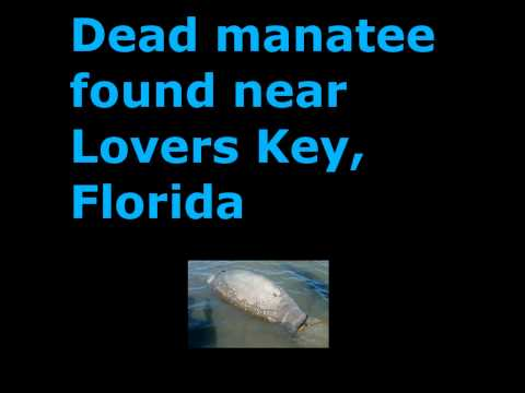 30 Tonnes Of Dead Fish, 20 Dead Pelicans, A Dead Manatee And A Dead Dolphin