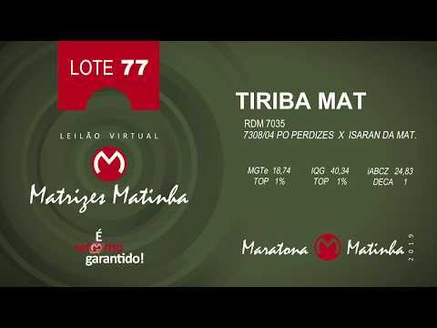 LOTE 77 Matrizes Matinha 2019