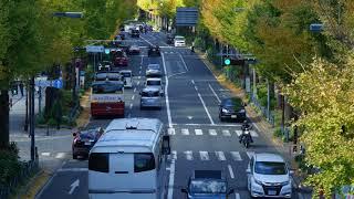 【 4K 】 Panasonic Lumix DMC-G7 「 横浜 山下公園通り 」
