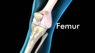 Knee Joint Anatomy - 3D Medical Animation || ABP ©