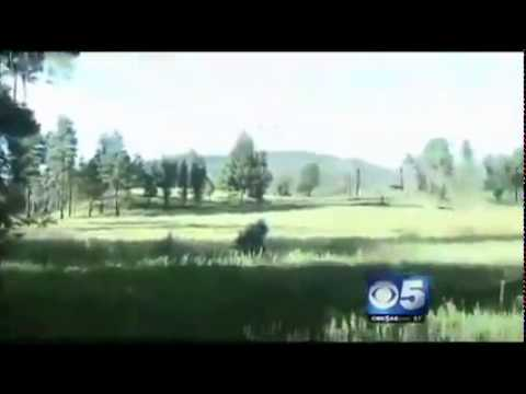 Bigfoot Proven To Exist Navajo Indian Reservation