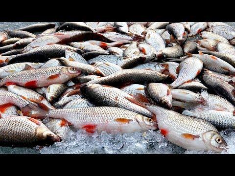 Самая лучшая прикормка для зимней рыбалки.