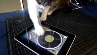 iggy scratches the ipad