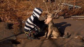 Шымкентец, приютивший под своей крышей 25 собак и 60 кошек, просит помощи