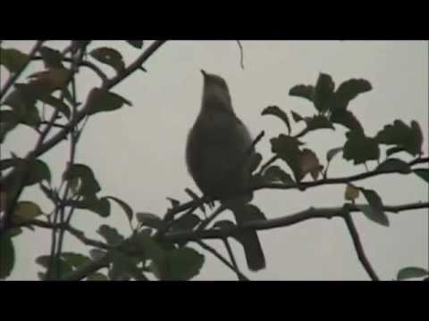 To Kill a Mockingbird  2012