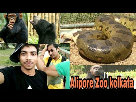 Alipore Zoo kolkata Yellow Anaconda | West Bengal kolkata | Bengal Tiger